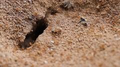 Ant's nest underground. Stock Footage