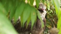 Especial Bird behind Leaves Stock Footage