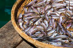 Stock Photo of Small Fish drying on bamboo basket in the sun, color filter applied