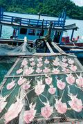 Dried squid in the sun in traditional way on fisher nets in Thailand - stock photo