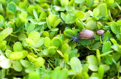 Snail on leaf in garden green grass . Stock Photos