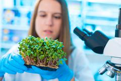 Research green plants in the laboratory Kuvituskuvat