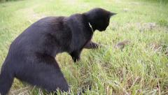 Cat playing with a mouse in the grass Stock Footage