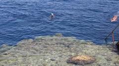 Egypt. Red Sea coastal coral reef, kids snorkeling. Arkistovideo