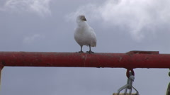 Snow petrel atop a winch at the  Almirante Brown Stock Footage