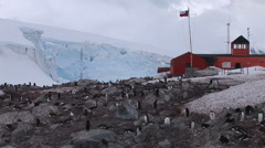 A colony of Gentoo penguins nest in front of the Almirante Brown Stock Footage