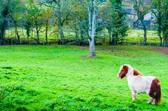 White chestnut pony horse in green grass field, copy space available Stock Photos
