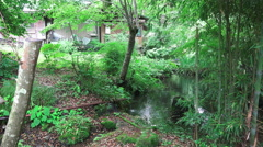 Forest Pond By Japanese House Stock Footage