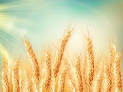 Golden wheat field and sunny day. EPS 10 - stock illustration
