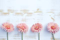 pink gerbera on white rustic wooden background - stock photo
