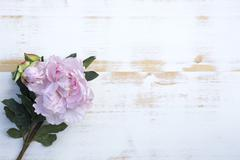 pink peonies on white rustic wooden background - stock photo