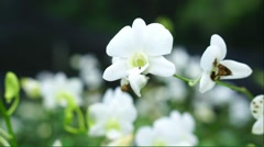 White orchid flower in the plantation Stock Footage