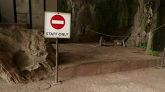 Funny monkey behind staff only sign, aggressive jumps to camera Stock Footage