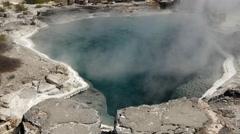 Stock Video Footage of Geyser within Whakarewarewa thermal valley in Rotorua New Zealand