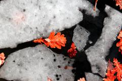Melted ice with yellow leaves Stock Photos