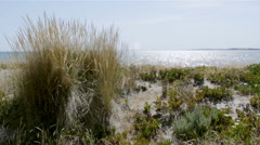 Ammophila arenaria grass at wind in Ria Formosa Wetlands, Algarve Stock Footage