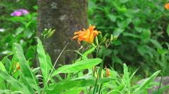 Orange Flower In Green Forest Stock Footage