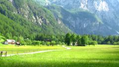 Tree in the middle of a green valley - stock footage