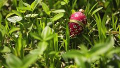 Red Decorative Easter Egg in Grass (Pysanky or Pisanka) Stock Footage