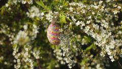 Overhead of Easter Egg on White Flowering Bush (New Bradford Pear) Stock Footage