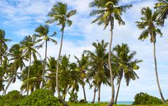 Good seascape view  with palmtrees on the island Gan in Indian  Ocean, Maldiv - stock photo