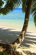 Cool shadow of the palmtree on the island Gan in Indian Ocean, Maldives - stock photo