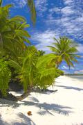 Superior palmtrees on the beach in Indian Ocean, Maldive island, Gan - stock photo