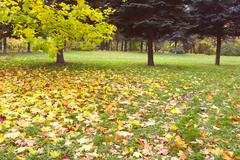 The nice october autumn park - stock photo