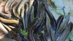 Tight group of Catfish Stock Footage