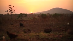 Sunset and goat Uganda - stock footage