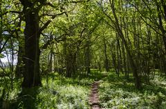 Footpath in a green forest - stock photo