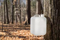 Maple Syrup Tapping Using a White Collection Bottle Stock Photos