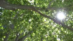 4K Walking, Tracking Foliage Forest Leaves Sunshine, Sun Rays Beam Branches Wood Stock Footage