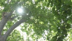 Foliage Forest Leaves, Sunshine, Sun Rays, Beam in Branches Wood, Summer View Stock Footage