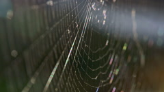 Closeup of a spiders web Stock Footage