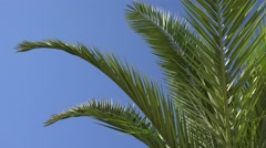 4K Palm Tree on Beach Coconut Tree Leaves Beautiful Tropical Summer View Stock Footage