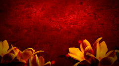 Red and Yellow Tulips 1080  background Stock Footage
