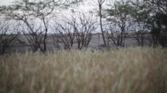 Wheat field in a village, long shot, soft focus, shallow DOF Stock Footage