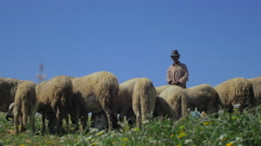 Berber cheep Shepherd Stock Footage