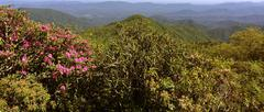 wide angle rhododendron mountain - stock photo