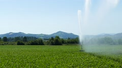Traveling sprinkler in a maize field. - stock footage