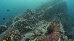 Drift over coral reef rock deep  Stock Footage