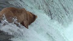 Tighter Shot of Salmon Jumping Close to Bear on Falls Stock Footage