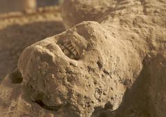 Ancient Human Remains Stock Photos
