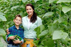 Cucumber crop Stock Photos