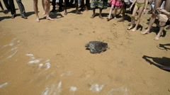Local people and tourists with turtle on the beach on Tangalle Stock Footage