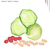 Fresh Cabbage with Vitamin K and Vitamin C Stock Illustration