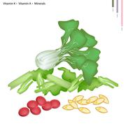 Pok Choi with Vitamin K and Vitamin A - stock illustration