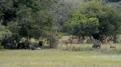 Kumana National Park, formerly Yala East, Kumana, Eastern Province, Sri Lanka Stock Footage