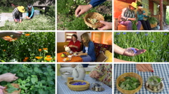 Women gather herbs and drink healthy tea. Footage clips collage. Stock Footage